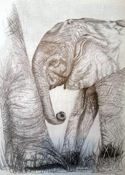 Baby elephant in pencil