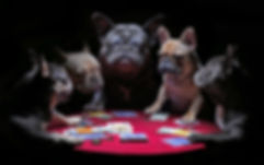French bulldogs playing cards.jpg