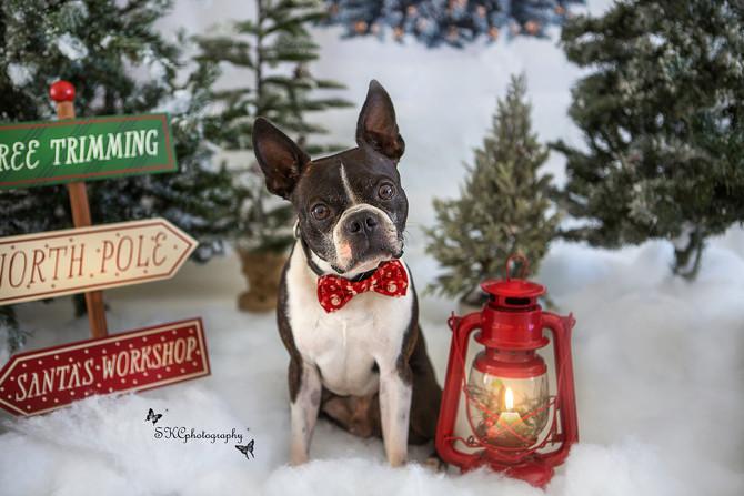 Family and Pet Photos - HAPPY HOLIDAYS