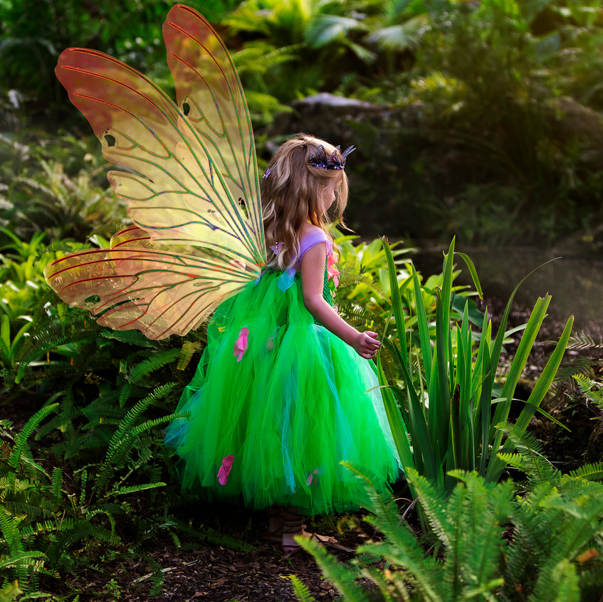 _D4A3305 wings facebook