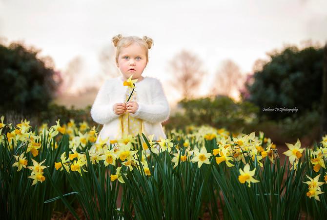 Daffodils Mini Sessions