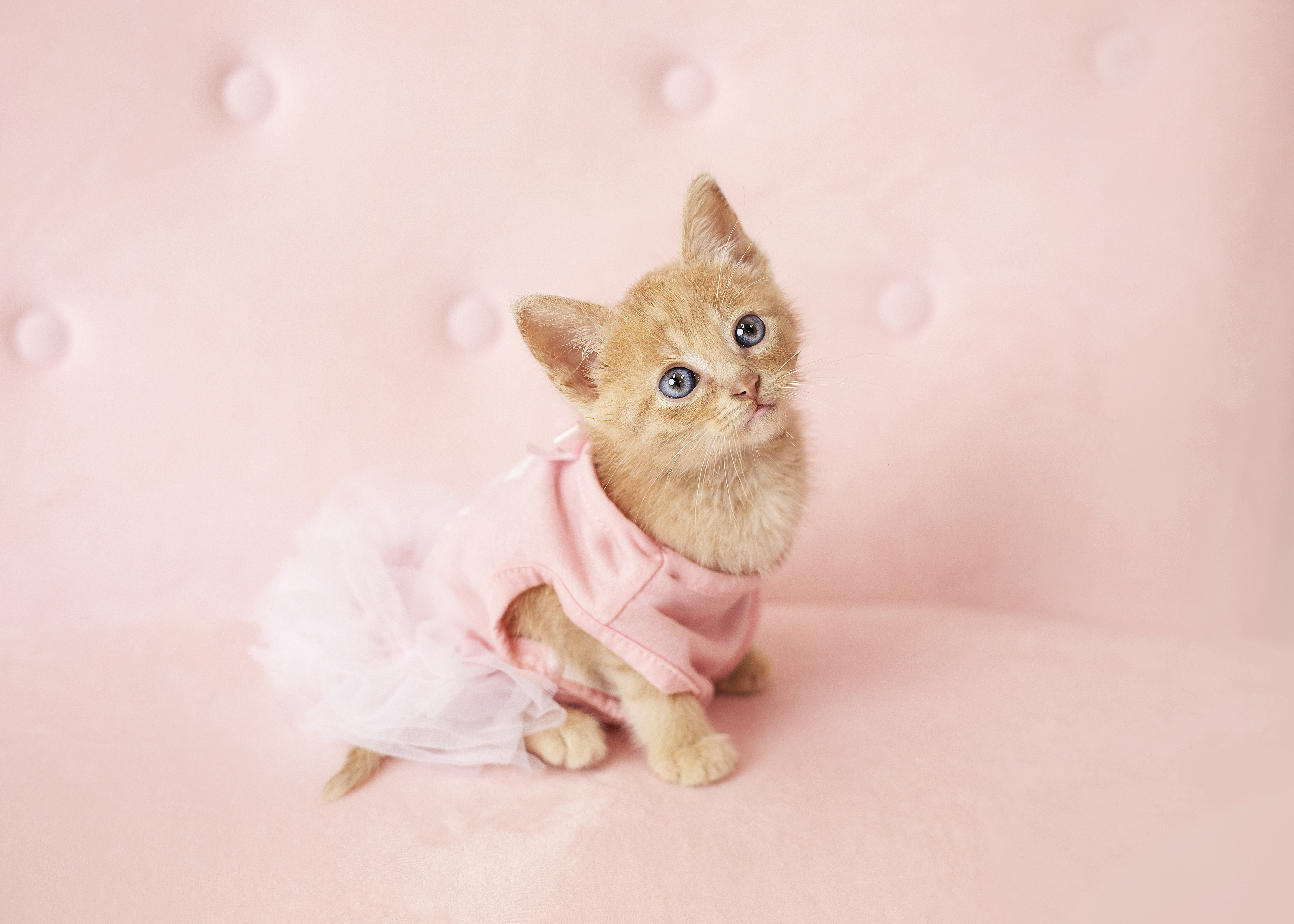 Hello Kitty Birthday Photo Shoot
