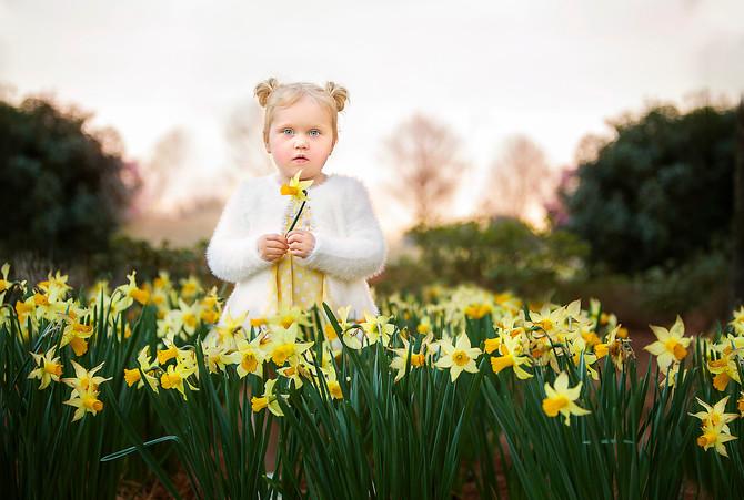 Morning Daffodiles