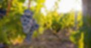 starnberger-see-wein.jpg.jpg