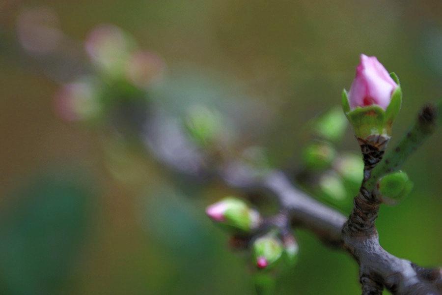 Spring Buds_edited.jpg