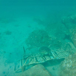 Turtle on Chair at Carambola Steffi Murt