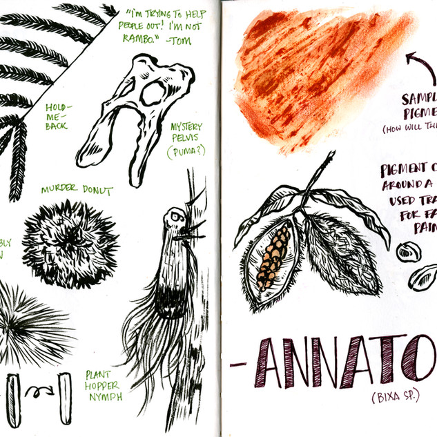 Guyana Field Journal, Jan 23 & 24