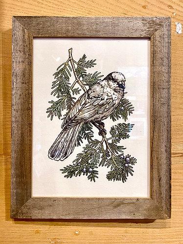 Camp Robber: Original Painting