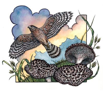 Hawk's Wings