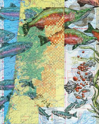 Charting Ecology: Coho Salmon