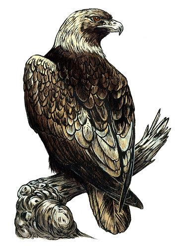 Golden Eagle: Original Painting