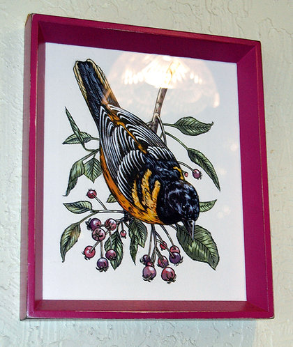 Baltimore Oriole: Original Painting