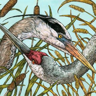 Heron & Crane