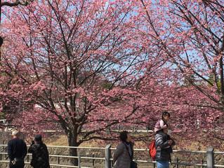 春爛漫🎵ココロも踊る春景色😄