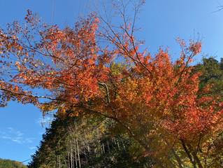 今年もあとひと月。師走らしい天気で山の木々も今が見頃🍁
