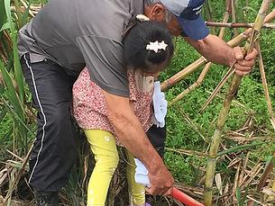 サトウキビ刈り体験 沖縄