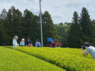 新茶シーズンも終盤🍵久しぶりの雨でお茶農家さんもひと息つけたようです😌