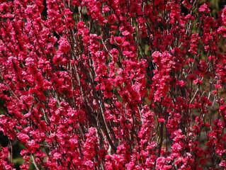 心躍る春🌸🌸🌸里には春がいっぱい!!