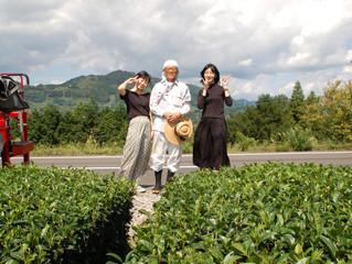 秋摘み新茶始まりました!お茶摘み体験のお客様もお茶農家さんのお手伝い(^^♪