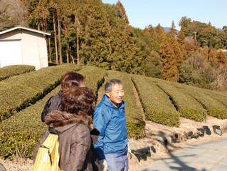 冬ならではの体験?!富士山を眺めながらお茶農家さんと茶畑散歩しませんか?