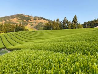 2つの美しい緑のじゅうたん。似て非なるは何故?