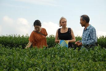 茶摘み体験 静岡 世界農業遺産