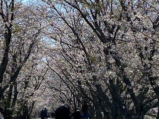 ぶらり春の天浜線の旅へ🌸🌸🌸