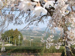 歩きたくなる道 旧東海道の難所 中山峠に春が来た!