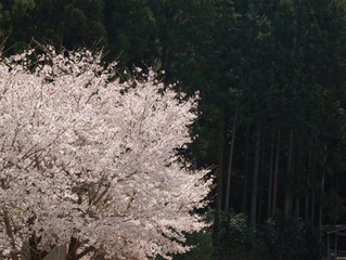不思議な春。3月もあとわずか🌸
