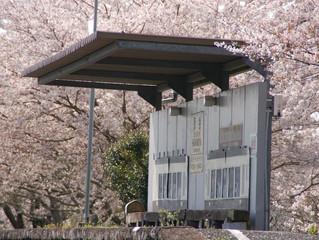 初めて過ごす里山の春、艶やかに、しなやかに、美しく、有り難く、でもバタバタと💦