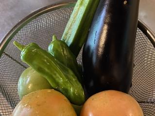 今シーズン初の夏野菜収穫祭