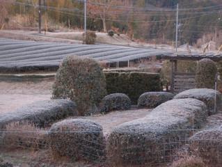 静岡ならではの真冬の朝景色
