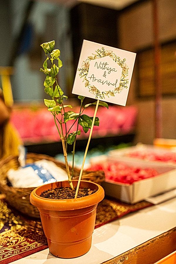 Plants for gifting .jpg