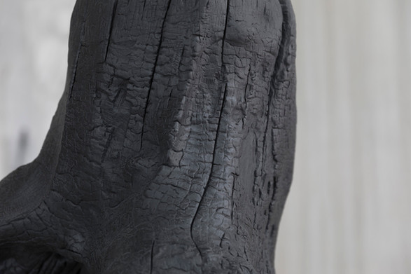 Detail of Tronc Brule