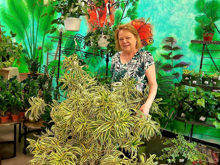 Inside Houseplants Galore: The Place and the People