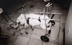 contraption+dog.jpg