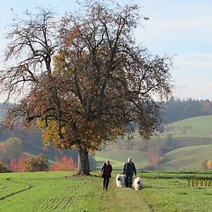 November Spaziergang Melchnau 2018