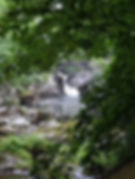 Looking towards Pont-y-Pair bridge from the gardens of Sw-y-Dwr