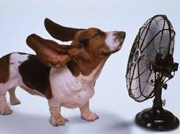 staying cool photo.png