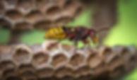Guepe_01-David_Hablutzel-Pexel.jpg