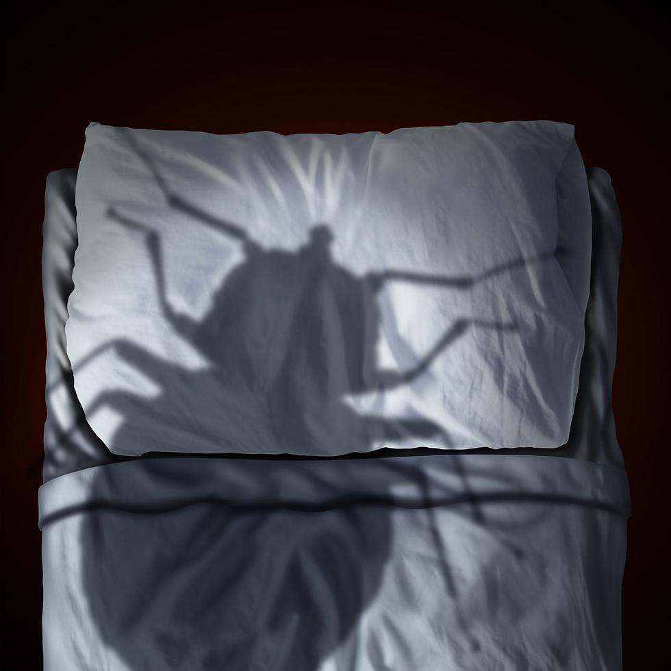 Photo punaises de lit