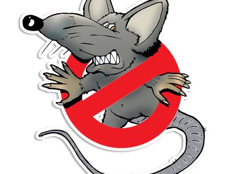 La dératisation pour venir à bout des rats, souris, mulots et surmulots