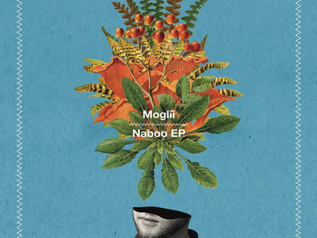 Escape Your Comfort Zone with the Innovative New Release from Moglii