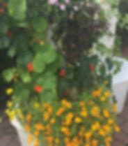 Camillas Spiselige Blomster have