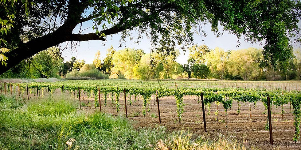 2021 Wine Education and Immersion trip to Lodi. California