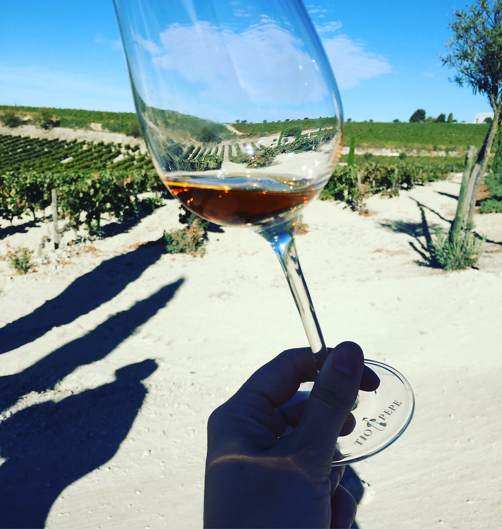 A glass of Oloroso in the vineyard
