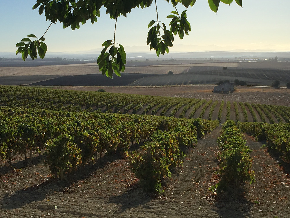 Vineyards of Jerez