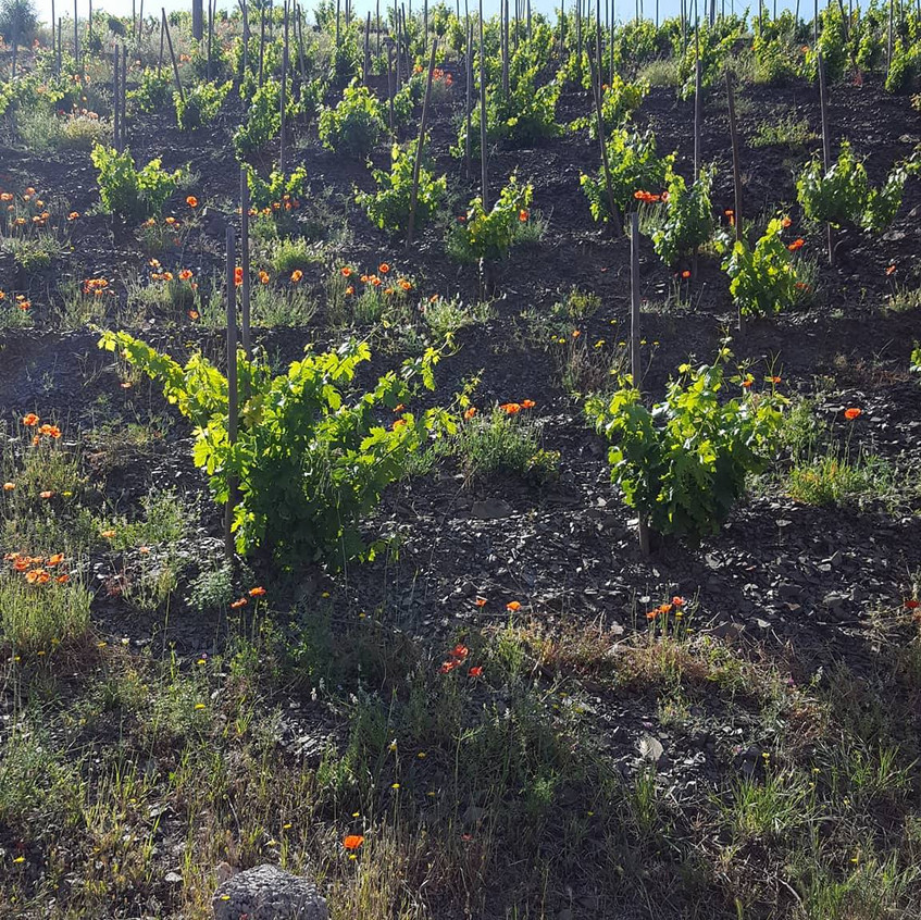 Priorat Vineyards