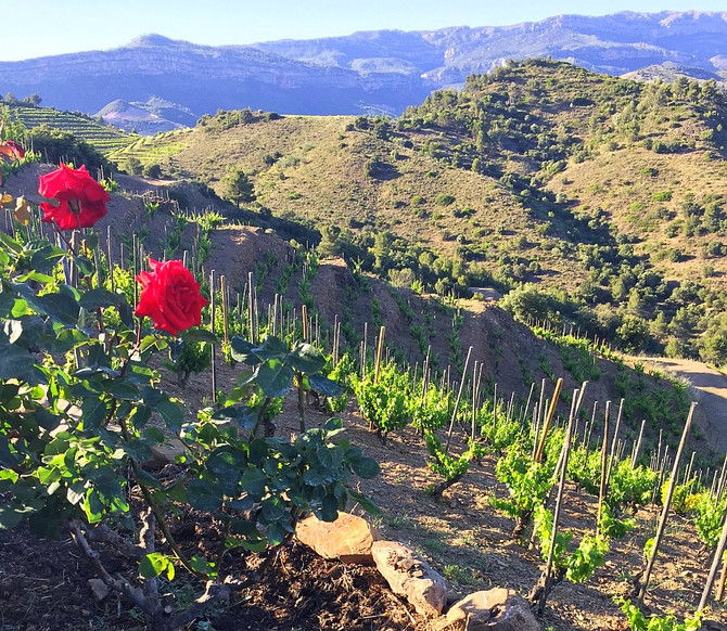 Discovering Priorat