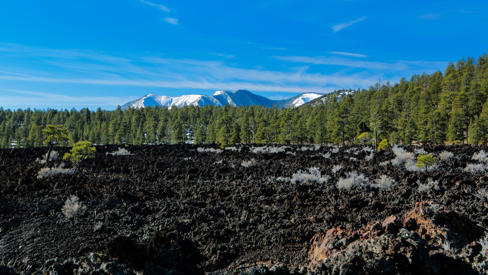 Tree Line Volcanic Basic